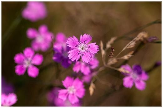 Wildblume des Jahres 2012