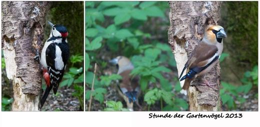Stunde der Gartenvögel 2013
