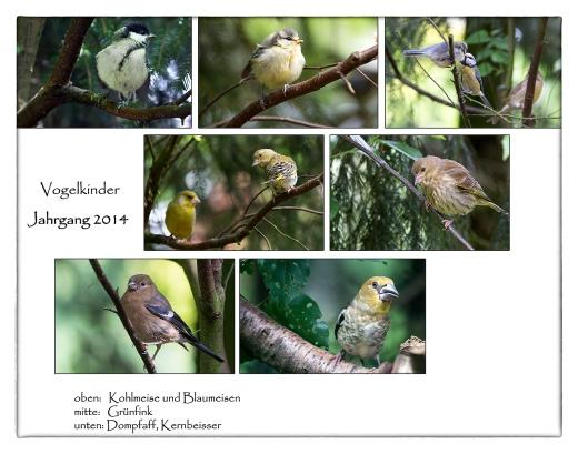 Vogelkinder-2014