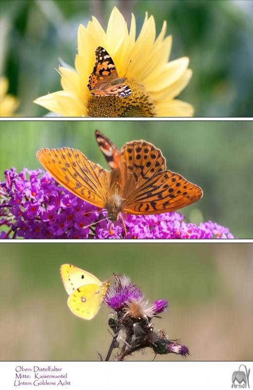 Schmetterllinge