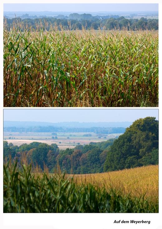 Mais-auf-dem-Weyerberg