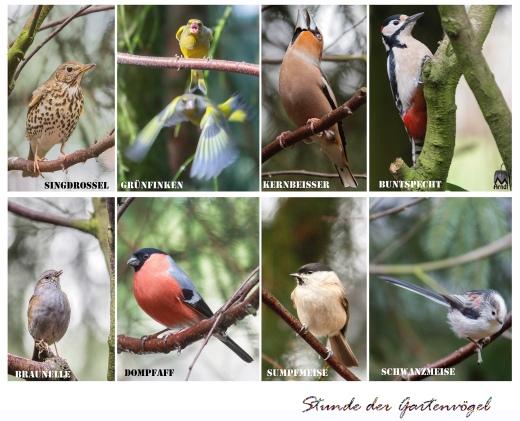 Alle-Vögel-sind-schon-da