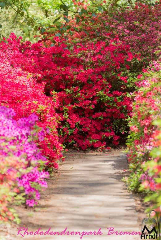 Rhododendronpark-Bremen